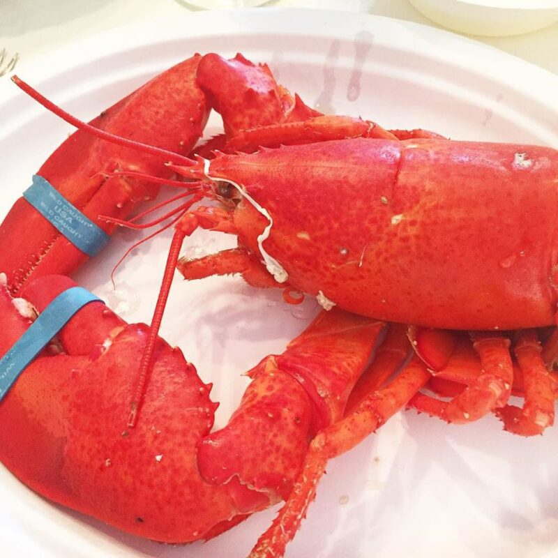 Lobster, Family Time & Bar Hopping - Mainely Keating