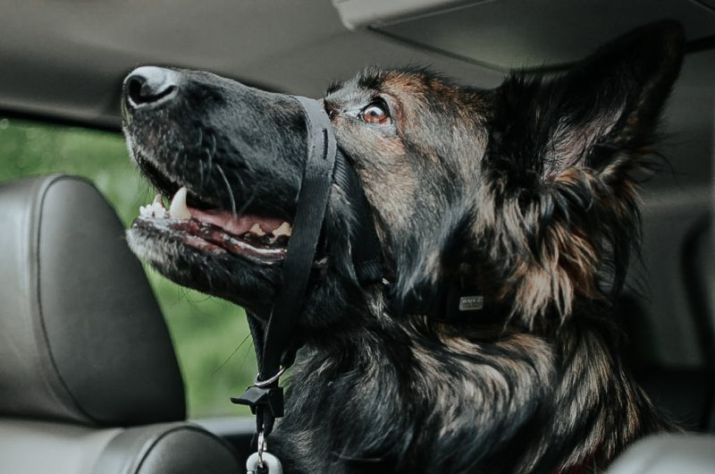 How To Travel With Pets Without All The Stress | MainelyKeating.com