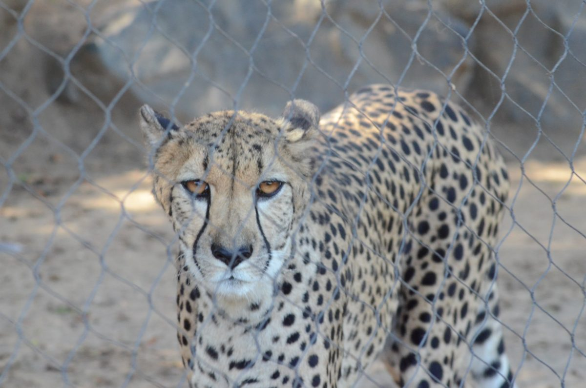 Visiting The San Diego Zoo_ Africa Rocks Exhibit| KeatingBartlett.com