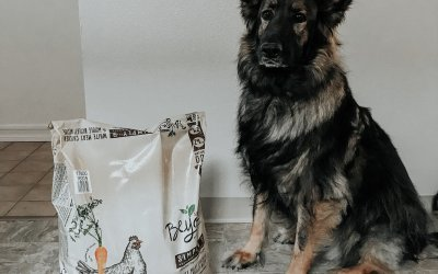 How To Keep Your Dog Happy & Healthy