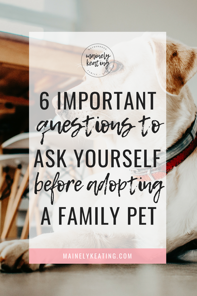 6 Questions To Ask Yourself Before Adopting A Family Pet | MainelyKeating.com