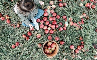 Visiting Hansel's Apple Orchard