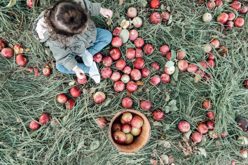 Hansel's Apple Orchard